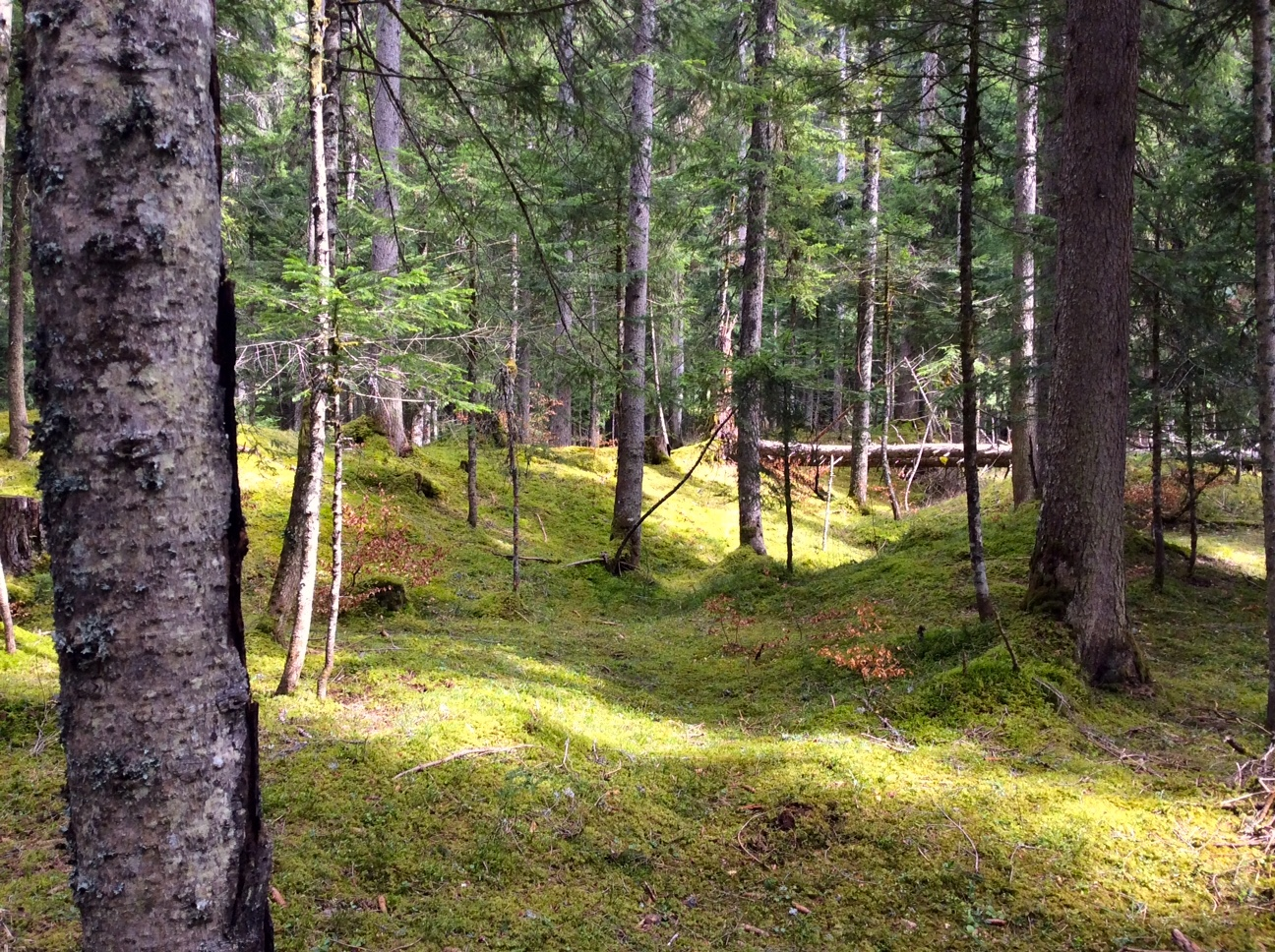 Bain de forêt   11.07.2021